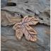 Maple Leaf Focal (1)